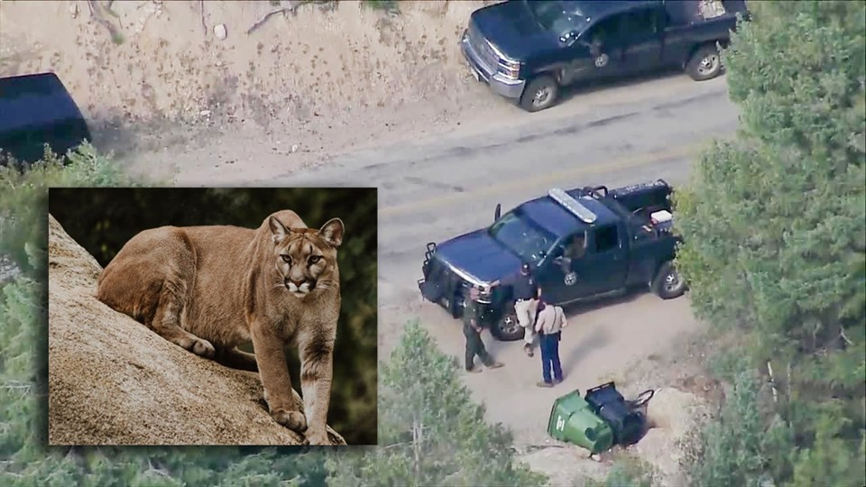 , 8-Year-Old Colorado Boy Severely Injured After Mountain Lion Attacks In Bailey