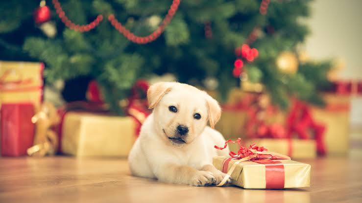 , Here's Everything You Need to Know to Keep Your Pets Safe and Healthy This Holiday Season