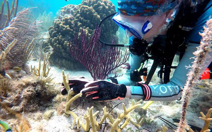 South Florida, Threatened coral get a second chance in South Florida